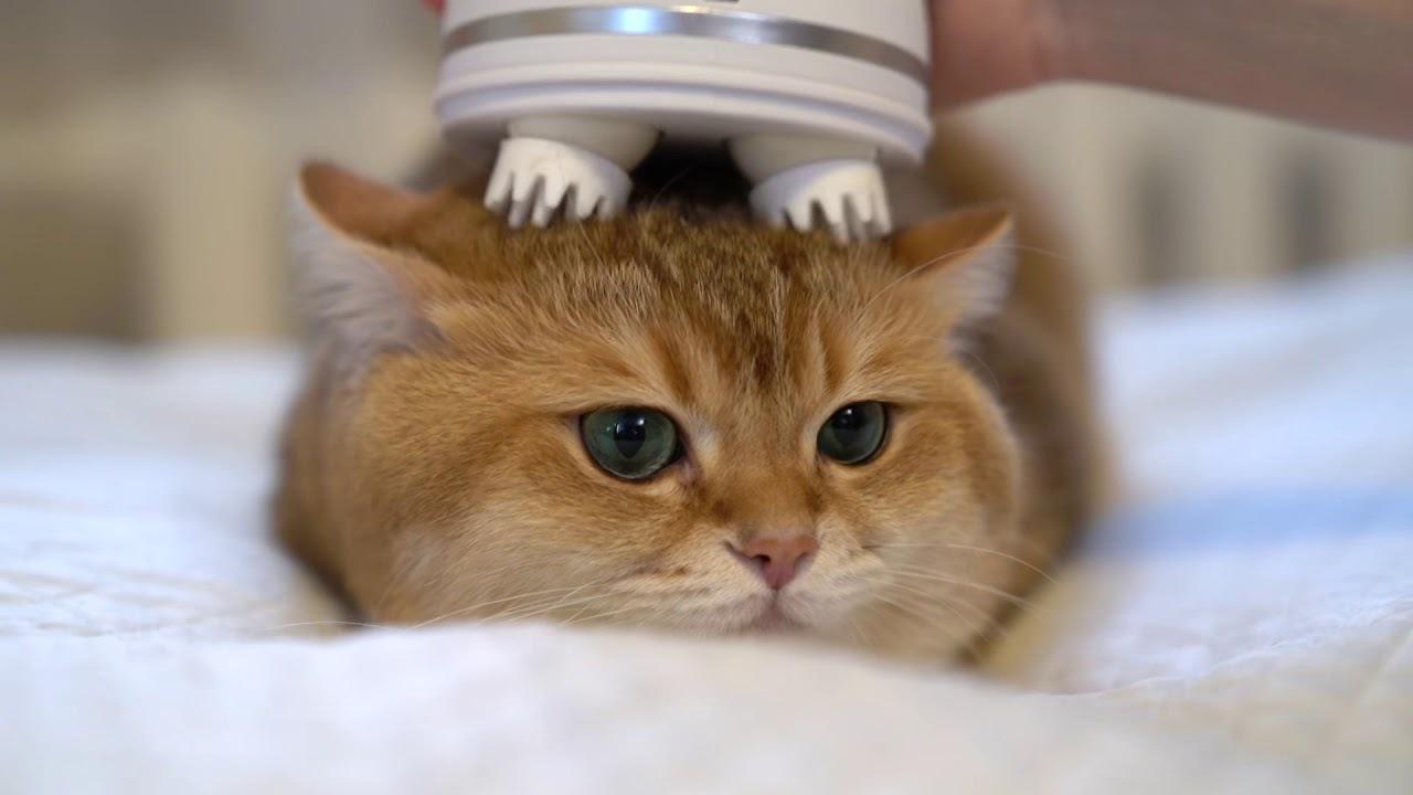 котик массажер