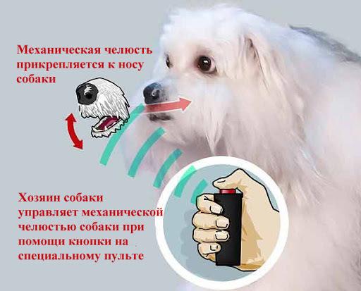 Секс Собака Ебет Девочка