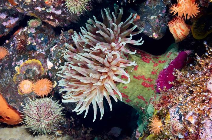 Ктооо проживает на дне океана? морские обитатели, арктика, океан, длиннопост