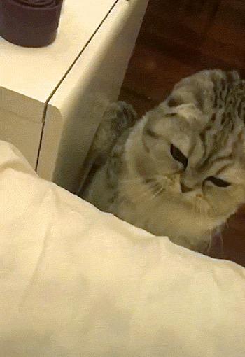 Погладь кота Кот, Рука, Правая рука, Поглаживание, Кровать, Тумбочка, Домашние животные, Милота, Гифка