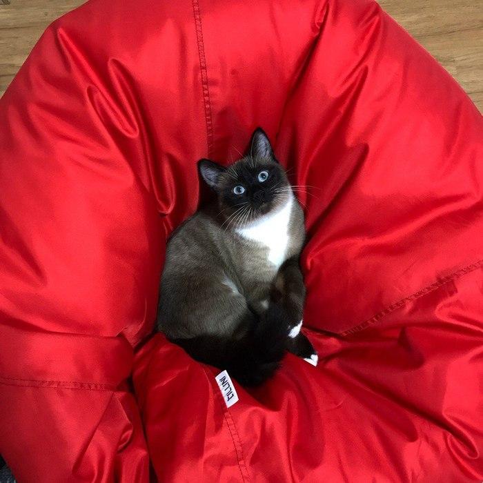 Как поймать кота Кот, Симба, Длиннопост