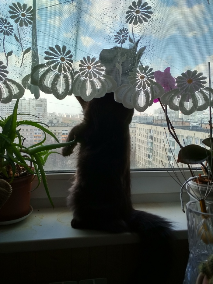 Недавно завели котика. Этот подоконник — одно из его любимых мест.