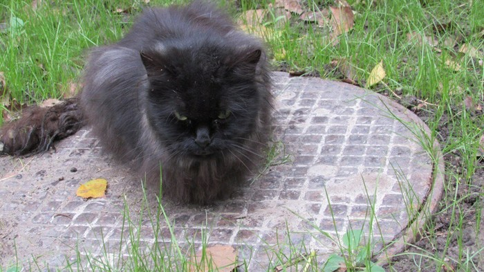 Кошка Тора: до, после и сейчас