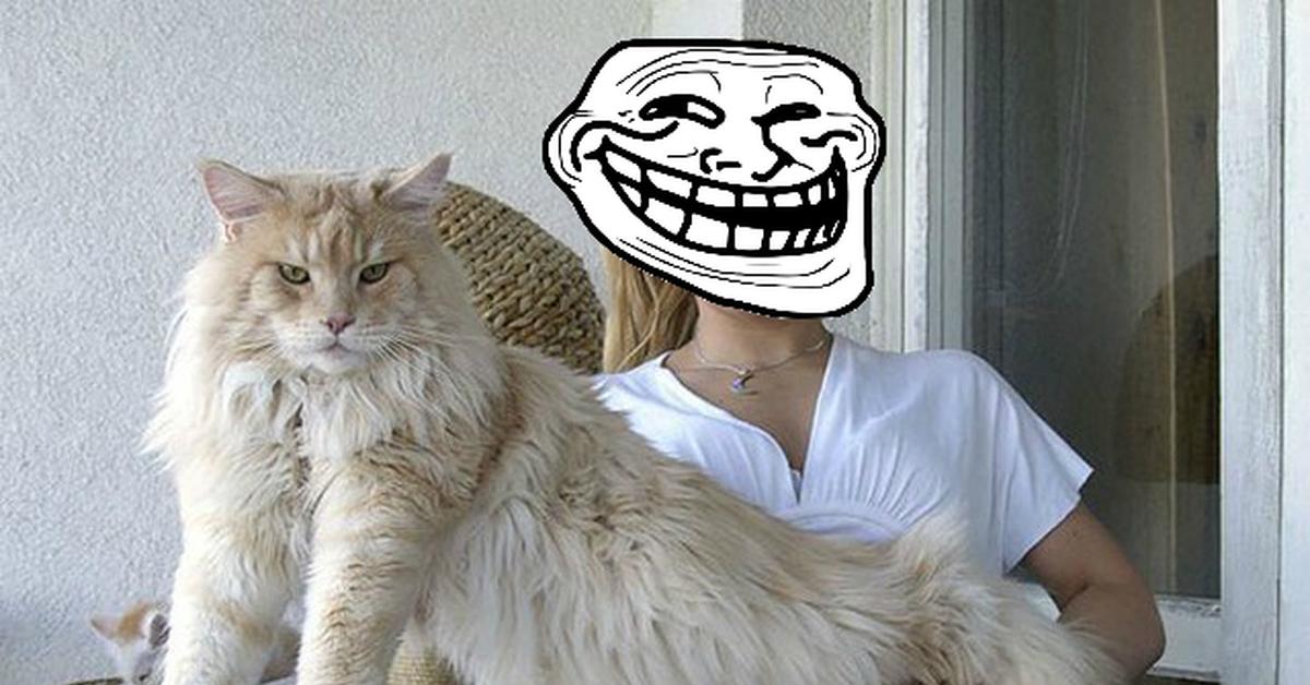 Как разрекламировать ленивого кота не дорогая реклама в интернете