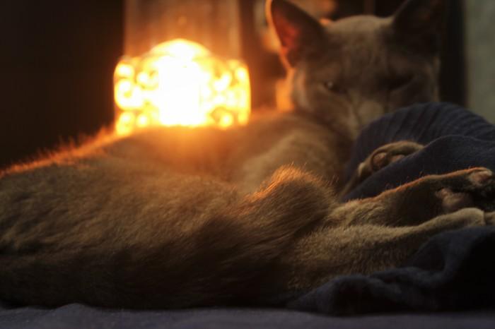 Тёплый, уютный котоламповый кот с лампой. Кот, Лампа, Кот с лампой, Фотография, Canon, Рукожоп, Чайник, Уют
