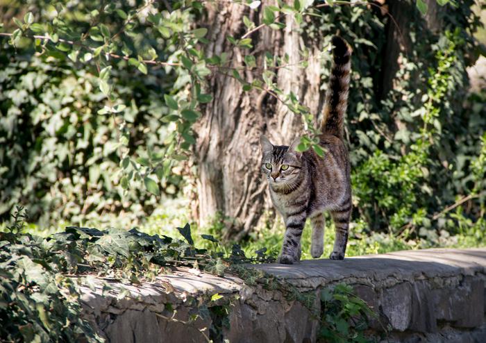 Апрельская кошка Кот, Фотография, Canon 60D, Весна