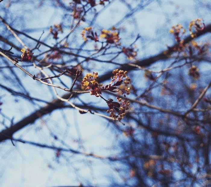 Москва цветет и зеленеет! Москва, Цветы, Нож, Начинающий фотограф, Весна, Вишня, Клен, Длиннопост