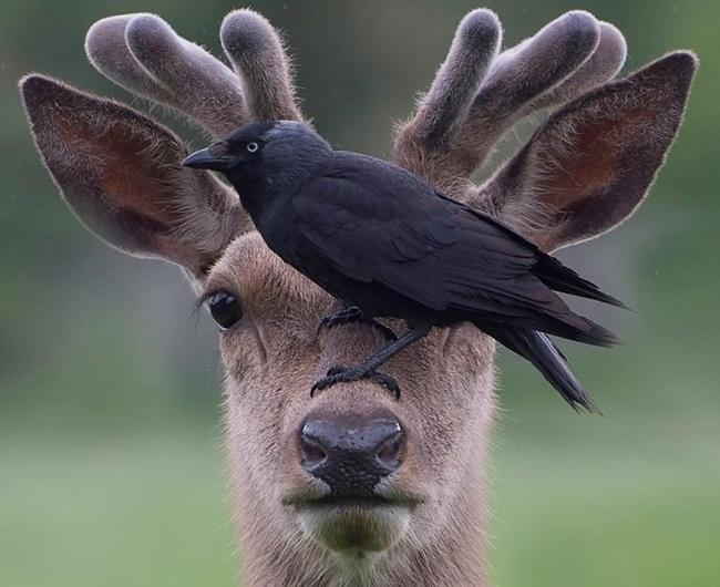 Наглый птиц Птицы, Животные, Фотография, Ворон