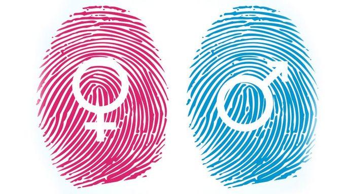 Ненужное отрезать: как формируется пол Пол, Наука, Гендер, Онтогенез, Длиннопост, Ориентация