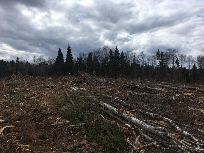Защитим леса Подмосковья! Лес, Экологическая катастрофа, Подмосковные леса, Гринпис, Длиннопост