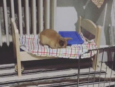 Радуется своей новой кроватке