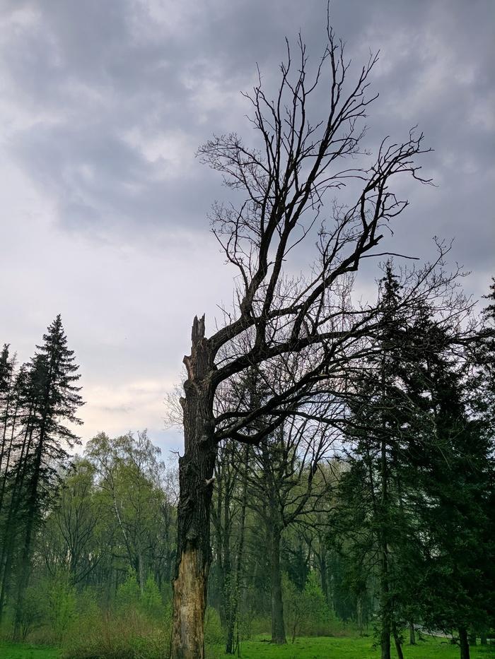 После ливня в Ботаническом саду в Москве Мобильная фотография, После дождя, Весна, LG G6, Ботанический сад, Длиннопост