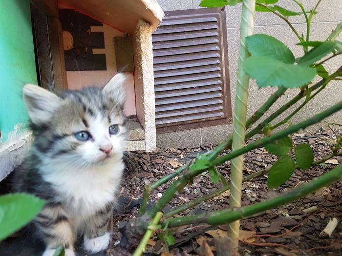 Котята: брат и сестра ищут дом Помощь животным, Кот, Без рейтинга, В добрые руки