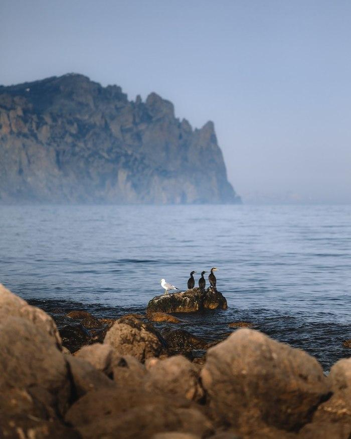Обитатели просторных и ещё практически безлюдных пляжей Солнечной Долины. Лисья бухта, Крым.