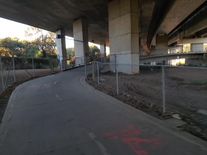Велосипедист в Сиднее Австралия, Велосипед, Длиннопост, Ящерица, Дорога, Сидней