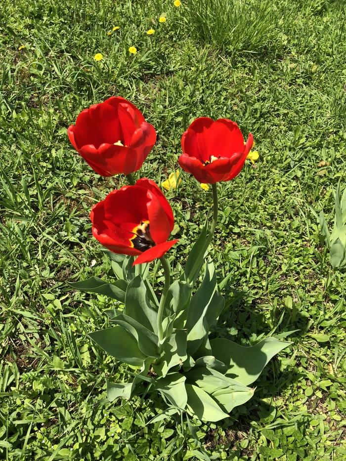 Немного весны вам в ленту)