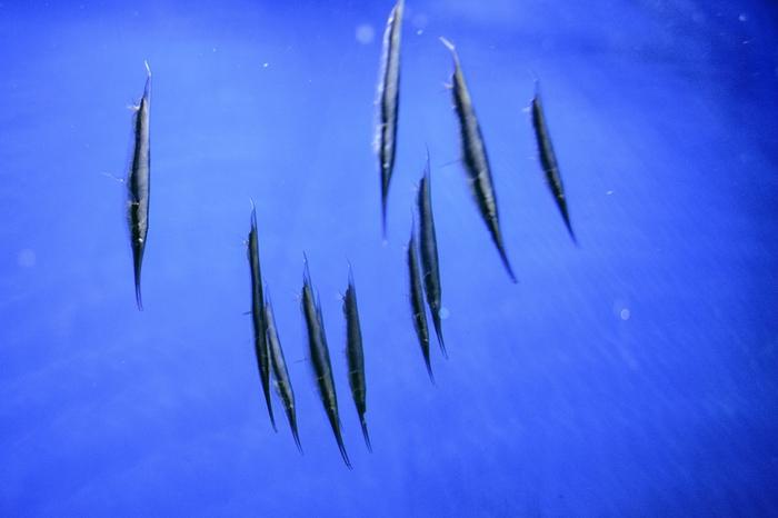 Рыбы Киевского окенариума Биология, Рыба, Аквариумные рыбки, Океанариум, Фотография, Nikon d3100, Длиннопост
