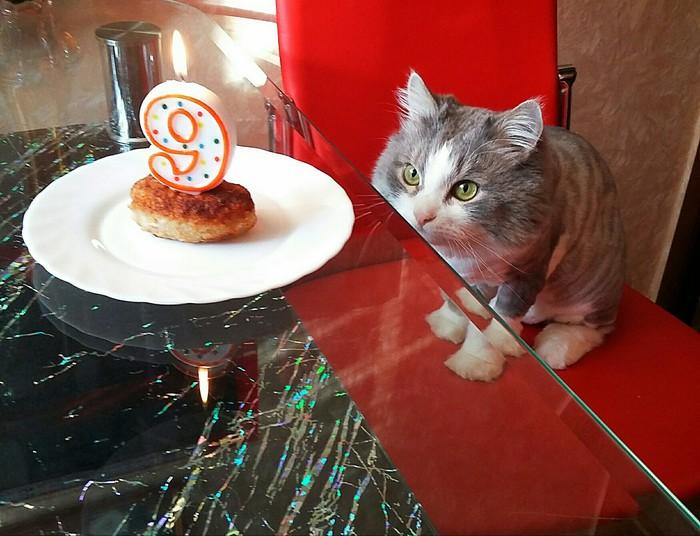День рождения 2018 Кот, 9лет, Котлеты