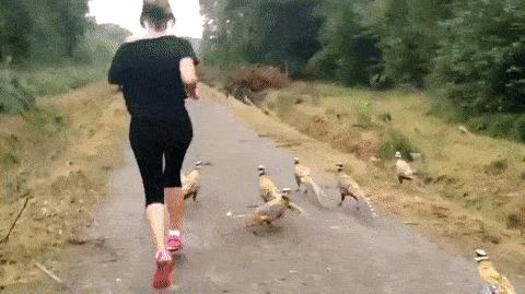 Пробежка по Юрскому парку.