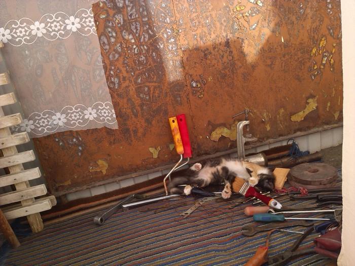 Так устала, что где работала, там упала Кот, Котомафия, Кот на балконе, Очень спящий кот