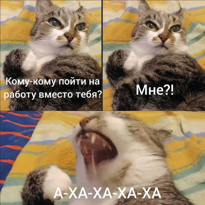 Любимая кошка Кот, Не хочу на работу, Куда ж без кота, Доброе утро