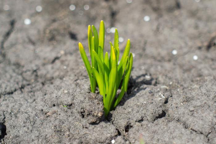 Куда в этом году подевалось тепло? Весна, Советская оптика, Мир-38б, Длиннопост