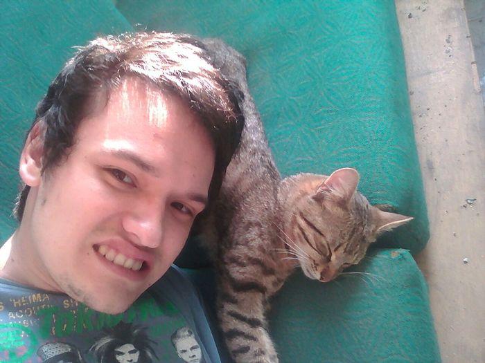 Ода к коту Кот, Домашние животные, Утро, Студенты, Кошка общага, Длиннопост