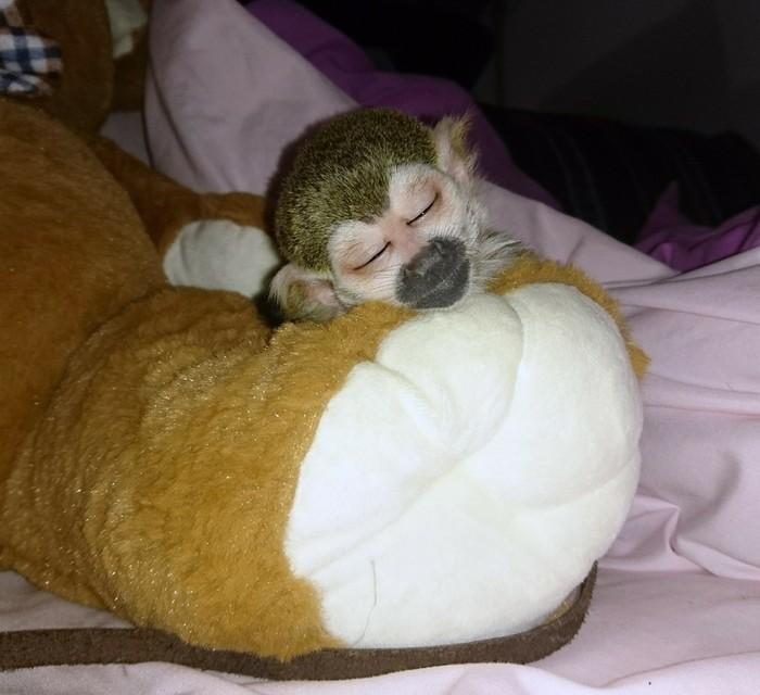 Спят усталые игрушки :)