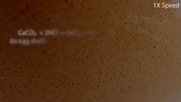 Кальций в гифках Химия, Лига химиков, Гифка, Кальций, Эксперимент, Длиннопост