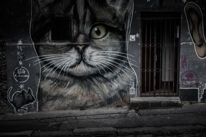 Одноглазый сербский кот Сербия, Белград, Граффити