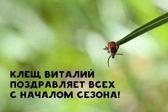 Про идиотов и клещей Лето, Отдых, Отпуск, Клещ, Длиннопост