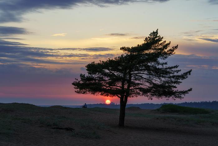 Закат над пляжем Ласковый, Ленинградская область Пляж, Закат, Сосна, Пляж ласковый, Ленинградская область, Санкт-Петербург