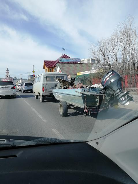 Двое в лодке Собака, Лодка, Дорога, Прицеп, Длиннопост