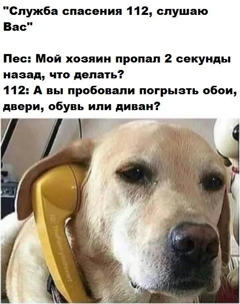 Собачья грусть