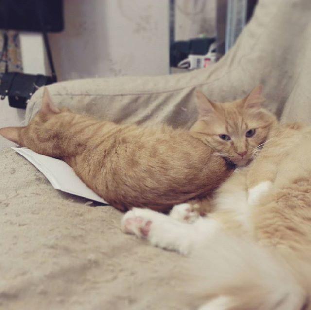 Моя живность Кот, Мягкая игрушка, Длиннопост
