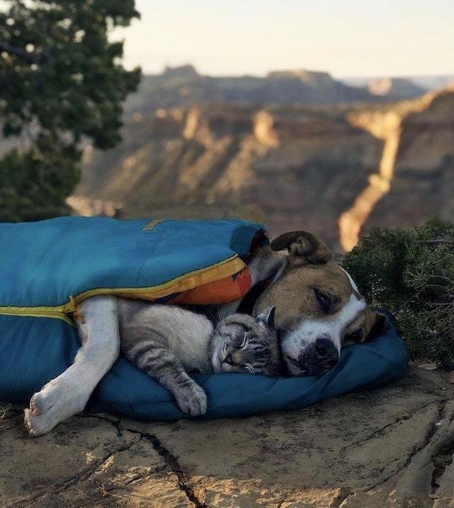 Настоящая дружбаHenry + Baloo Собака, Кот, Друзья, Henry + Baloo, Природа, Кемпинг, Фотография