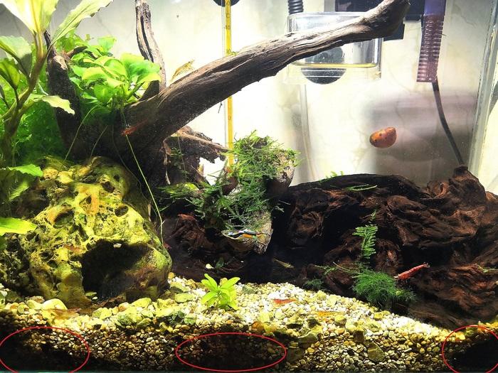 Как чистить грунт в маленьком аквариуме? Сифонка грунта, Нано аквариум, Длиннопост