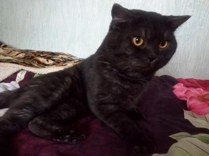 Найден кот, Владивосток Кот, Найденыш, Владивосток, Помощь, Без рейтинга