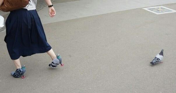Просто туфли голуби) Туфли, Голубь