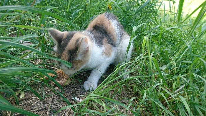Найдена кошка! Кот, Потеряшка, Найден кот, Минское шоссе, Московская область, Одинцово, Без рейтинга, Длиннопост