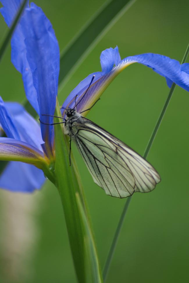Май крупным планом Цветы, Макро, Бабочка, Май, Длиннопост