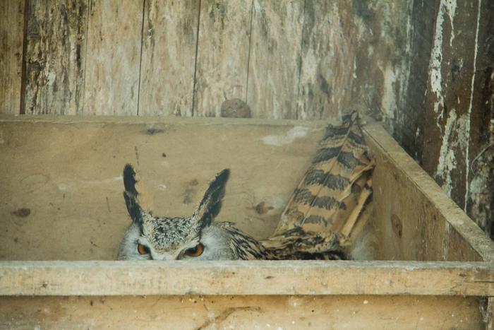 Камера наружного наблюдения системы«Угу» Филин, Гнездо, Наблюдение, Большой брат, Фублин