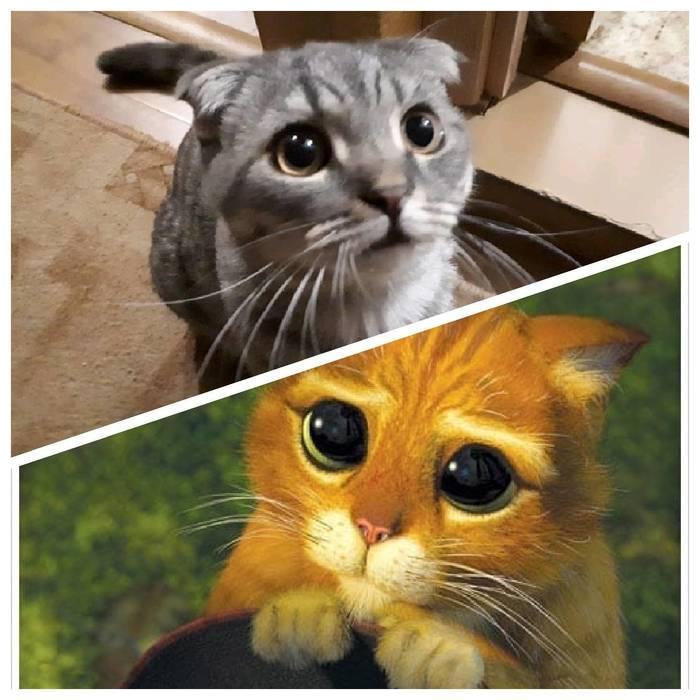 Голодный кот встречает на пороге Кот, Выпрашивает еду