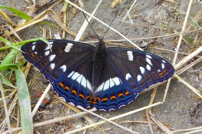 Бабочки. №2 Фотография, Макросъемка, Бабочка, Длиннопост