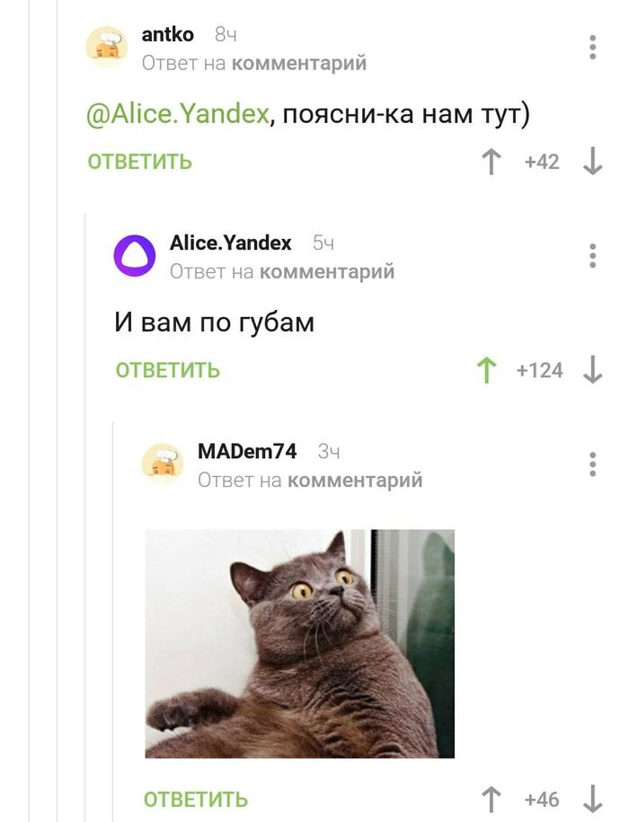 Яндекс.Алиса Комментарии, Кот, Длиннопост, Яндекс алиса, Комментарии на пикабу, Скриншот