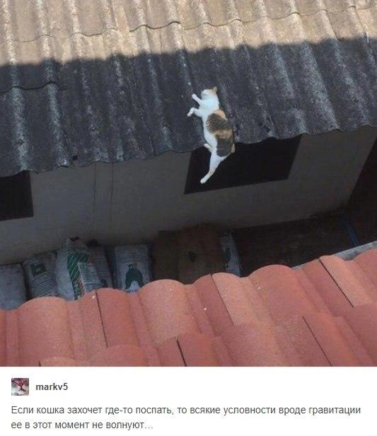 Кошки и гравитация