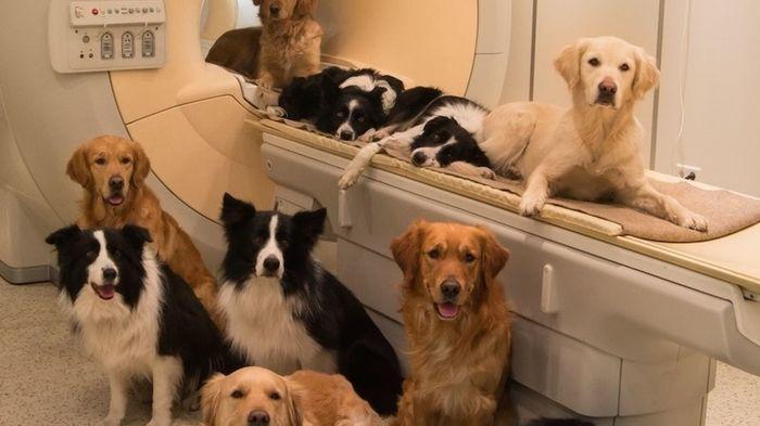МРТ и КТ животным МРТ, Животные, Медицина, Длиннопост