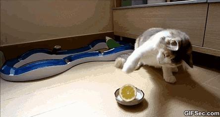 Пытается попробовать лимон