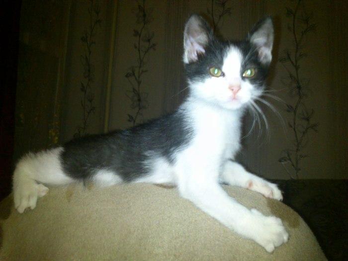 История кота. Часть 2. кот Булка, вор, чайный наркоман, пищевое поведение, обидчивый кот, длиннопост, кот