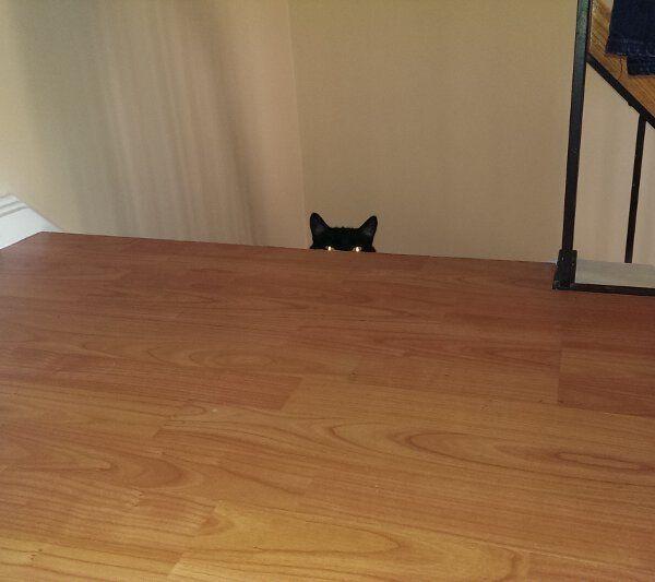 Коты, являющие истинным воплощением зла (четвероногий юмор) Коварные существа, Кот, Длиннопост